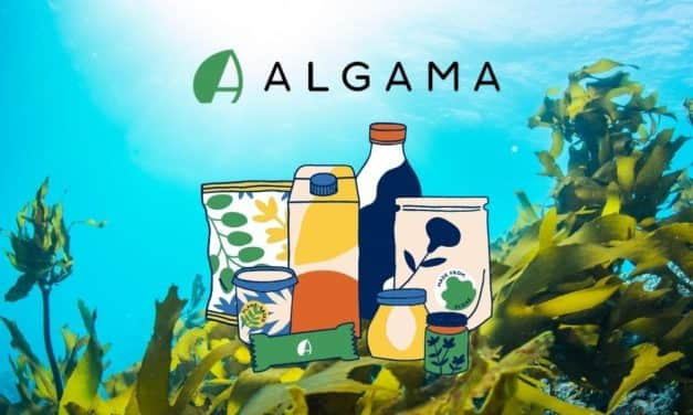 Consommons mieux avec les algues
