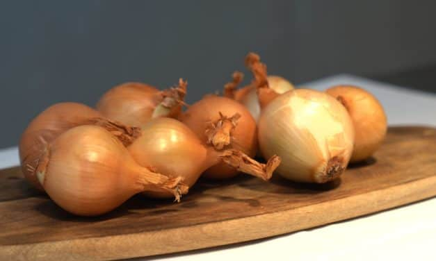 How to choose onions with Toshitaka Omiya